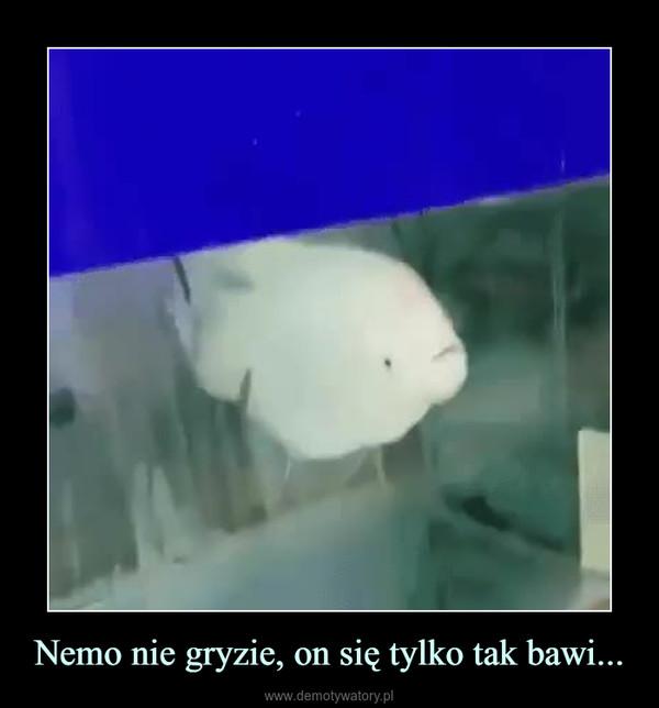 Nemo nie gryzie, on się tylko tak bawi... –