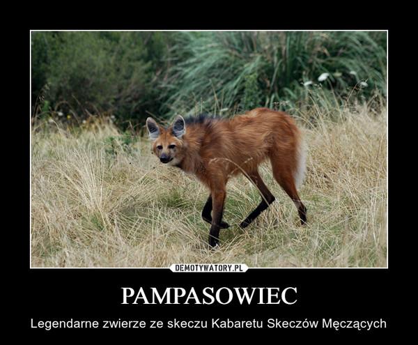 PAMPASOWIEC – Legendarne zwierze ze skeczu Kabaretu Skeczów Męczących