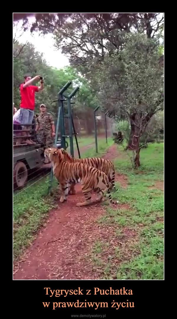 Tygrysek z Puchatkaw prawdziwym życiu –