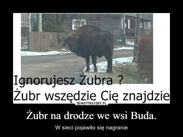 Żubr na drodze we wsi Buda. – W sieci pojawiło się nagranie