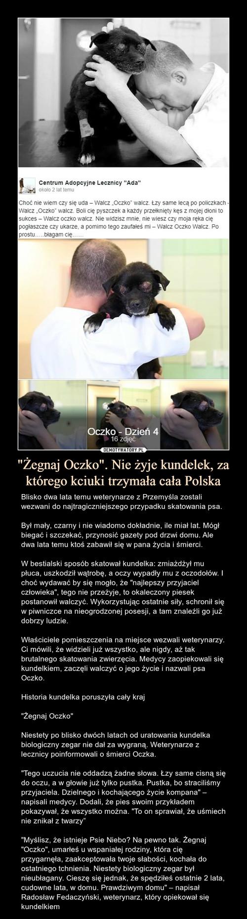 """""""Żegnaj Oczko"""". Nie żyje kundelek, za którego kciuki trzymała cała Polska"""