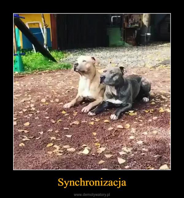 Synchronizacja –