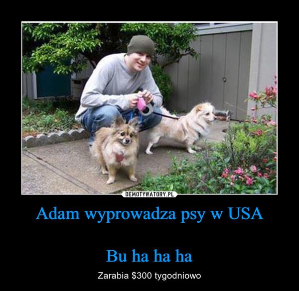 Adam wyprowadza psy w USABu ha ha ha – Zarabia $300 tygodniowo