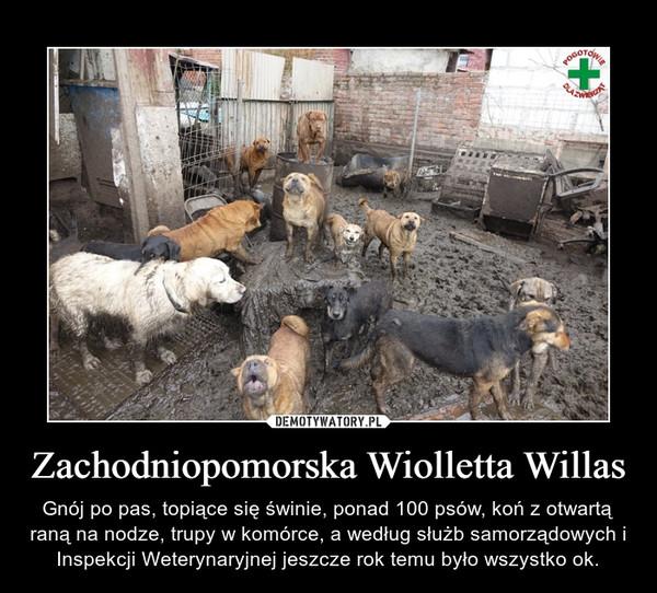 Zachodniopomorska Wiolletta Willas – Gnój po pas, topiące się świnie, ponad 100 psów, koń z otwartą raną na nodze, trupy w komórce, a według służb samorządowych i Inspekcji Weterynaryjnej jeszcze rok temu było wszystko ok.