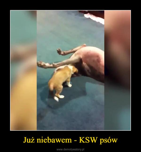 Już niebawem - KSW psów –