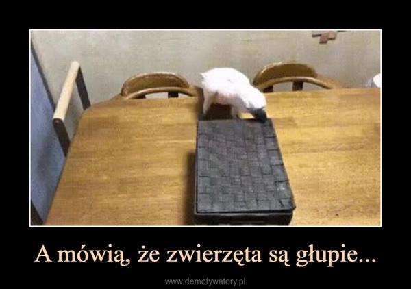 A mówią, że zwierzęta są głupie... –