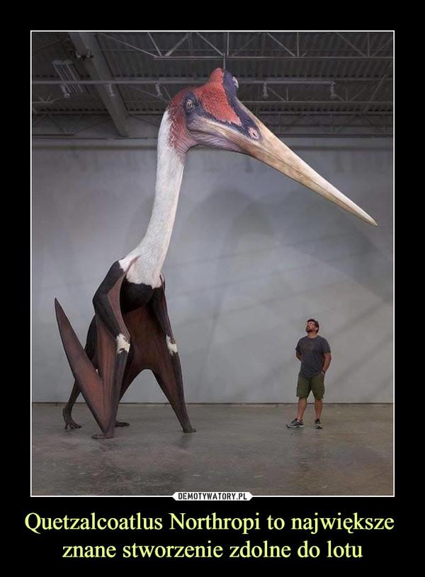 Quetzalcoatlus Northropi to największe znane stworzenie zdolne do lotu –