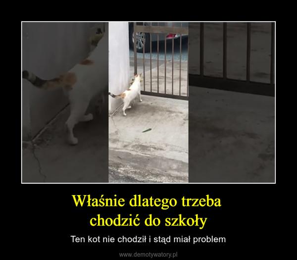 Właśnie dlatego trzeba chodzić do szkoły – Ten kot nie chodził i stąd miał problem