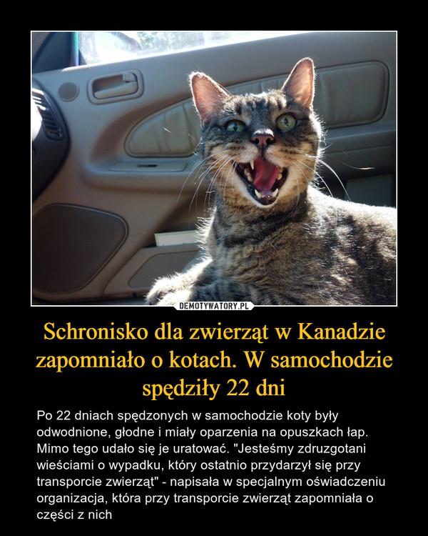 """Schronisko dla zwierząt w Kanadzie zapomniało o kotach. W samochodzie spędziły 22 dni – Po 22 dniach spędzonych w samochodzie koty były odwodnione, głodne i miały oparzenia na opuszkach łap. Mimo tego udało się je uratować. """"Jesteśmy zdruzgotani wieściami o wypadku, który ostatnio przydarzył się przy transporcie zwierząt"""" - napisała w specjalnym oświadczeniu organizacja, która przy transporcie zwierząt zapomniała o części z nich"""