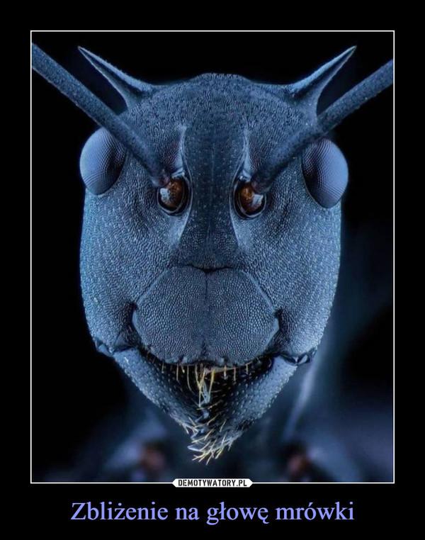Zbliżenie na głowę mrówki –