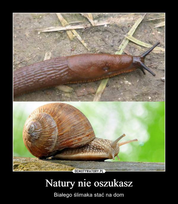 Natury nie oszukasz – Białego ślimaka stać na dom