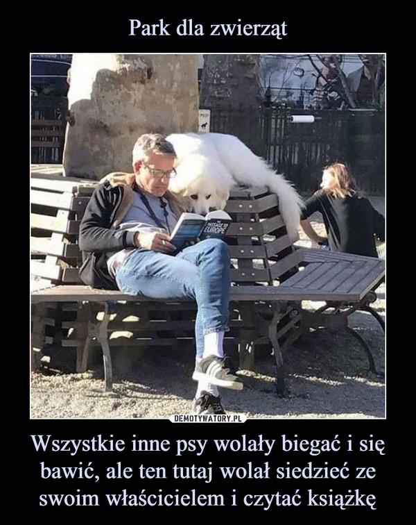 Wszystkie inne psy wolały biegać i się bawić, ale ten tutaj wolał siedzieć ze swoim właścicielem i czytać książkę –
