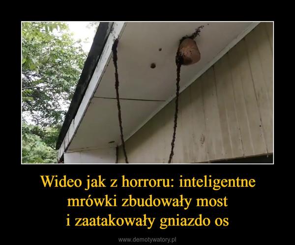 Wideo jak z horroru: inteligentnemrówki zbudowały mosti zaatakowały gniazdo os –
