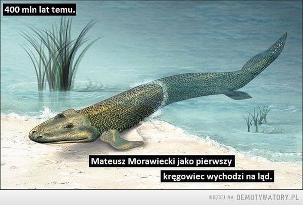 Mateusz Morawiecki jako pierwszy kręgowiec wychodzi na ląd –