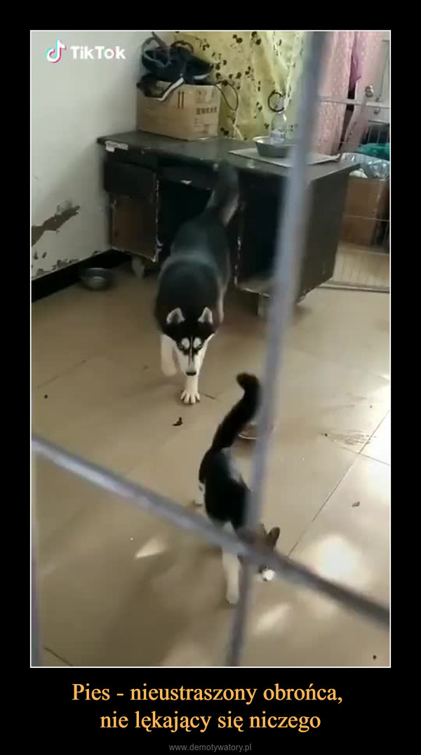 Pies - nieustraszony obrońca, nie lękający się niczego –