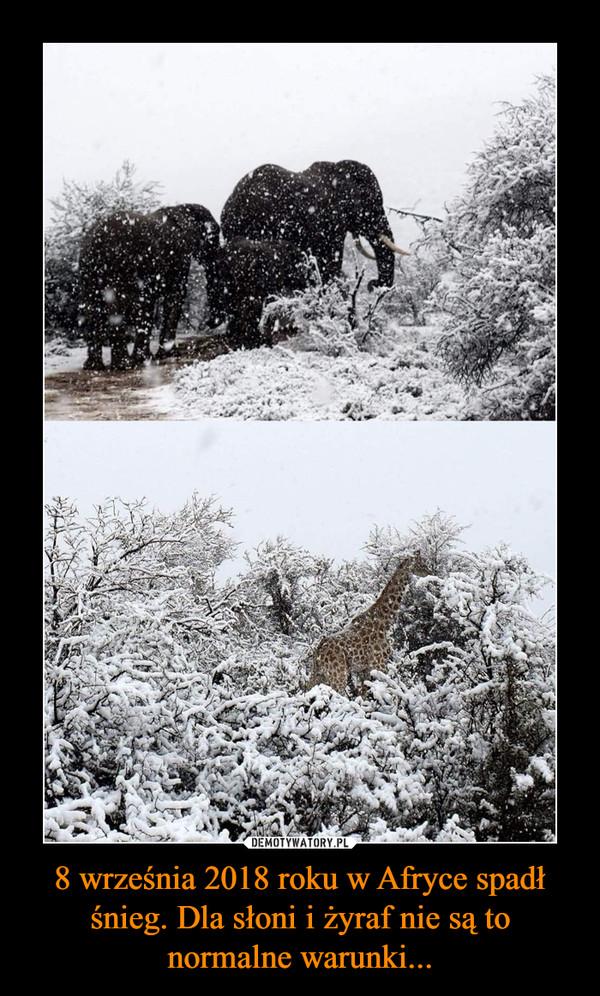 8 września 2018 roku w Afryce spadł śnieg. Dla słoni i żyraf nie są to normalne warunki... –