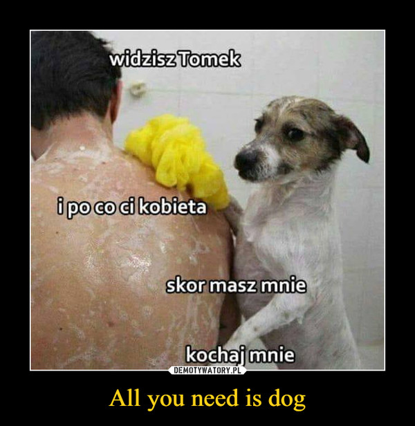 All you need is dog –