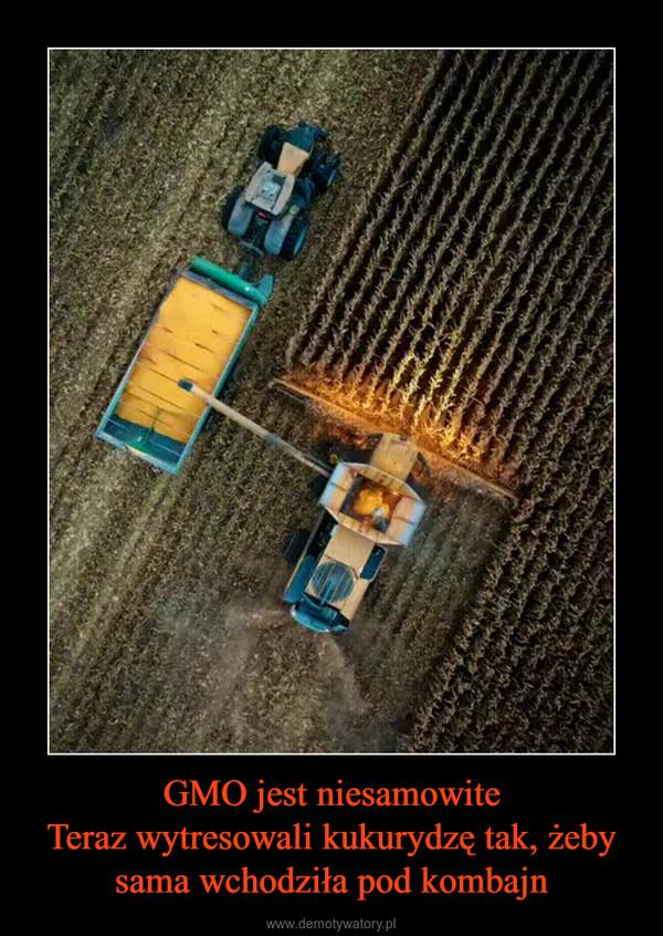 GMO jest niesamowiteTeraz wytresowali kukurydzę tak, żeby sama wchodziła pod kombajn –