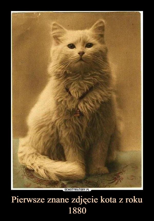 Pierwsze znane zdjęcie kota z roku 1880 –