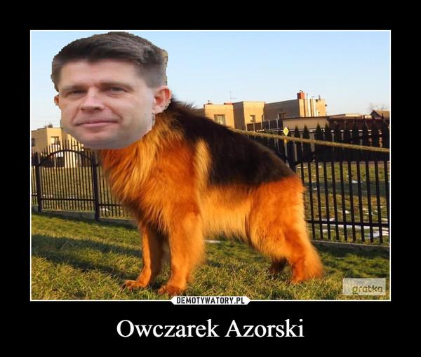 Owczarek Azorski –
