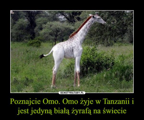 Poznajcie Omo. Omo żyje w Tanzanii i jest jedyną białą żyrafą na świecie –