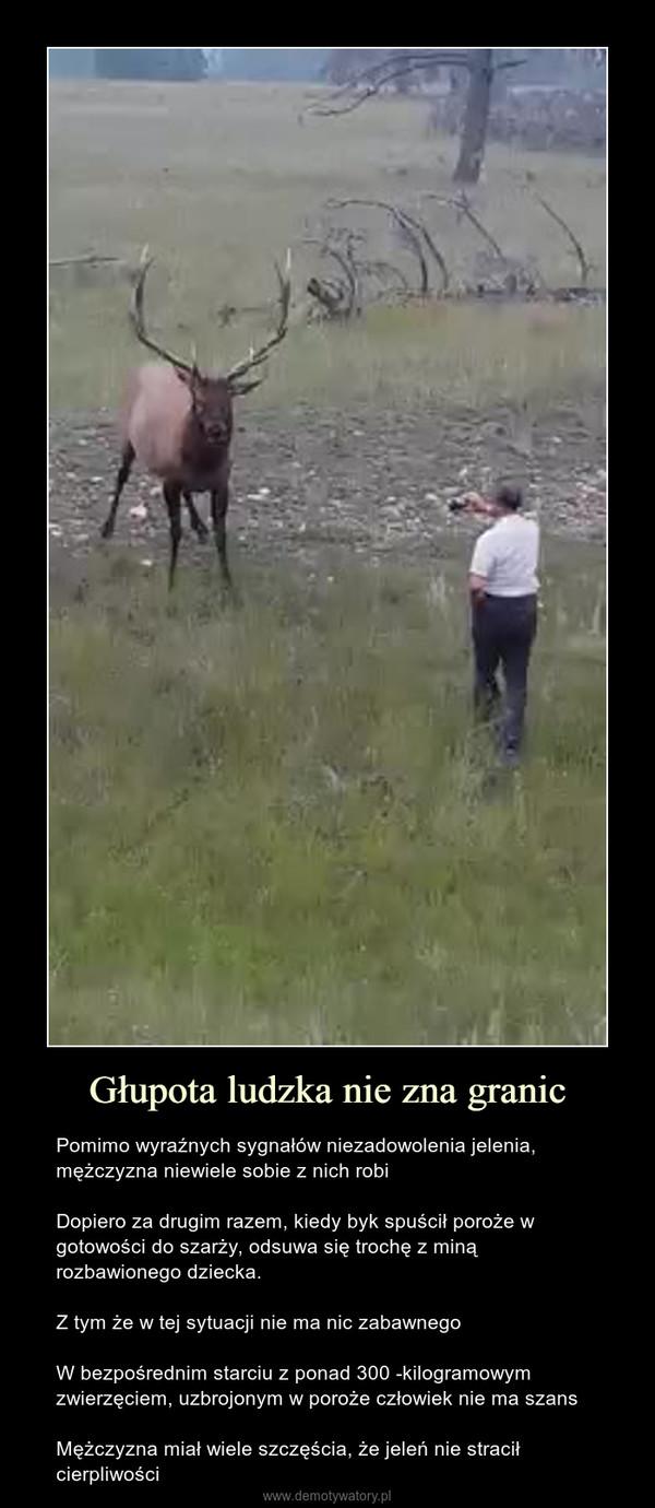 Głupota ludzka nie zna granic – Pomimo wyraźnych sygnałów niezadowolenia jelenia, mężczyzna niewiele sobie z nich robiDopiero za drugim razem, kiedy byk spuścił poroże w gotowości do szarży, odsuwa się trochę z miną rozbawionego dziecka.Z tym że w tej sytuacji nie ma nic zabawnegoW bezpośrednim starciu z ponad 300 -kilogramowym zwierzęciem, uzbrojonym w poroże człowiek nie ma szansMężczyzna miał wiele szczęścia, że jeleń nie stracił cierpliwości