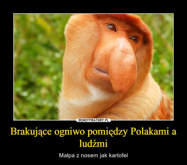 Brakujące ogniwo pomiędzy Polakami a ludźmi – Małpa z nosem jak kartofel