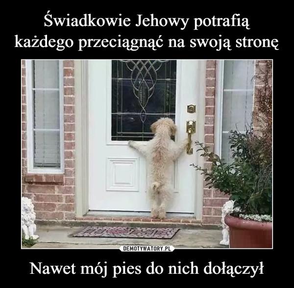 Nawet mój pies do nich dołączył –