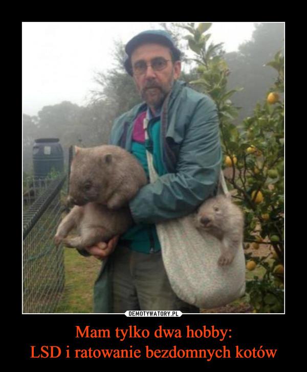 Mam tylko dwa hobby:LSD i ratowanie bezdomnych kotów –