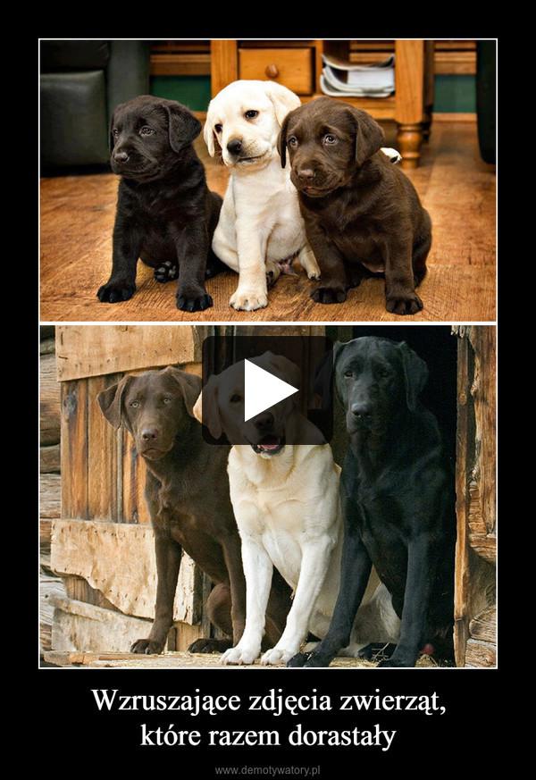 Wzruszające zdjęcia zwierząt,które razem dorastały –