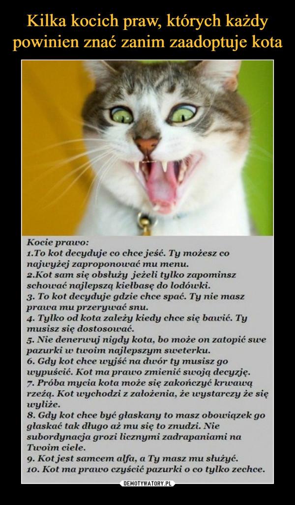 –  Kocie prawo: 1.To kot decyduje co chce jeść. Ty możesz co najwyżej zaproponować mu menu. 2.Kot sam się obsłuży jeżeli tylko zapomnisz schować najlepszą kiełbasę do lodówki. 3. To kot decyduje gdzie chce spać. Ty nie masz prawa mu przerywać snu. 4. Tylko od kota zależy kiedy chce się bawić. Ty musisz się dostosować. 5. Nie denerwuj nigdy kota, bo może on zatopić swe pazurki te twoim najlepszym sweterku. 6. Gdy kot chce wyjść na dwór ty musisz go wypuścić. Kot ma prawo zmienić swoją decyzję. 7. Próba mycia kota może się zakończyć krwawą rzeżą. Kot wychodzi z założenia, że wystarczy że się 8. Gdy kot chce być głaskany to masz obowiązek go głaskać tak długo aż mu się to znudzi. Nie subordynacja grozi licznymi zadrapaniami na Twoim ciele. 9. Kot jest samcem alfa, a Ty masz mu służyć. Kot ma prawo czyścić pazurki o co tylko zechce.