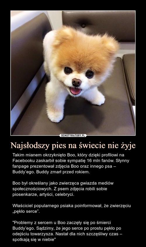 Najsłodszy pies na świecie nie żyje