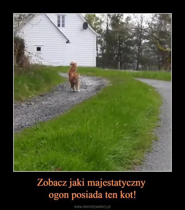 Zobacz jaki majestatyczny ogon posiada ten kot! –