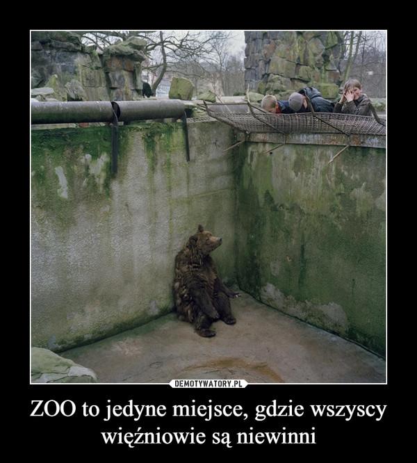 ZOO to jedyne miejsce, gdzie wszyscy więźniowie są niewinni –