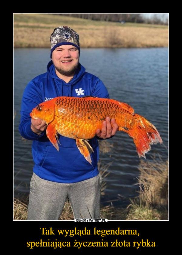 Tak wygląda legendarna, spełniająca życzenia złota rybka –