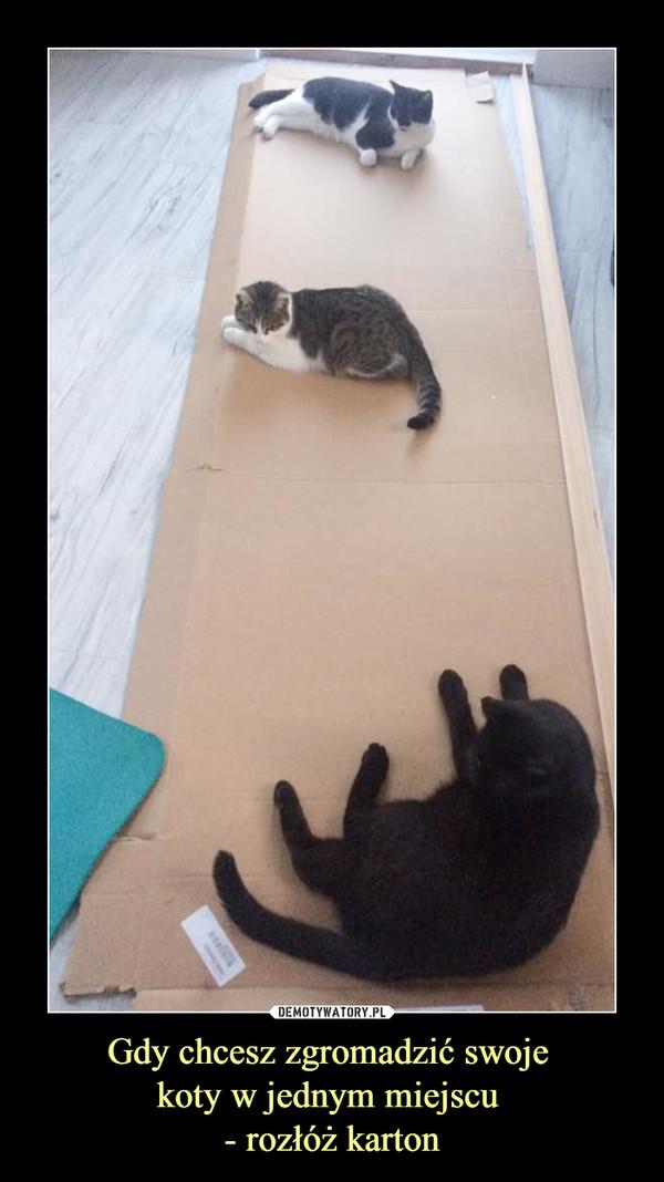 Gdy chcesz zgromadzić swoje koty w jednym miejscu - rozłóż karton –