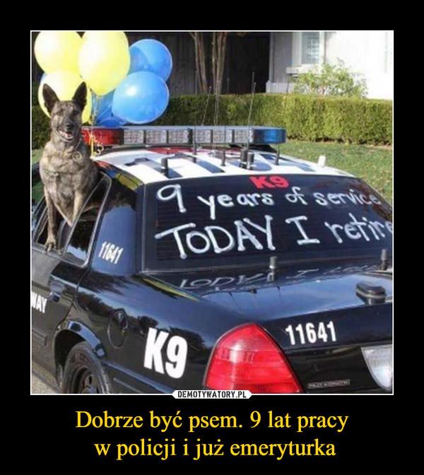 Dobrze być psem. 9 lat pracy w policji i już emeryturka –