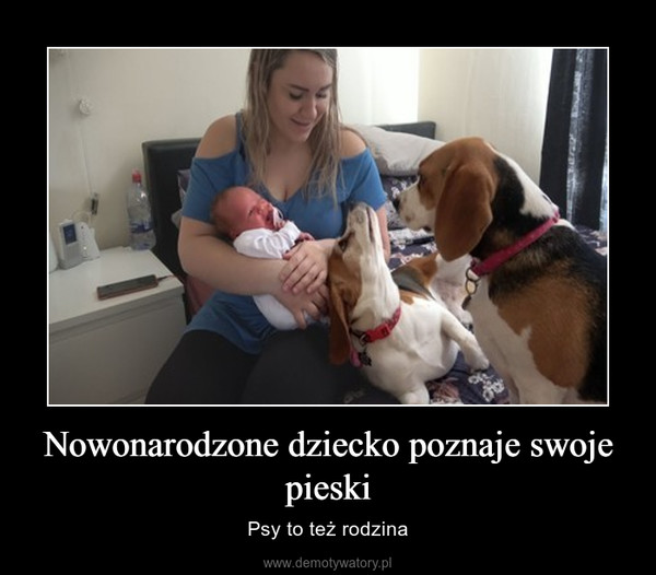 Nowonarodzone dziecko poznaje swoje pieski – Psy to też rodzina