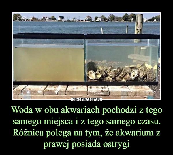Woda w obu akwariach pochodzi z tego samego miejsca i z tego samego czasu. Różnica polega na tym, że akwarium z prawej posiada ostrygi –