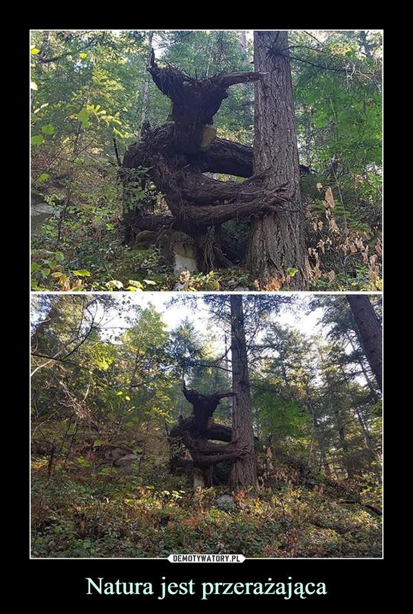 Natura jest przerażająca –
