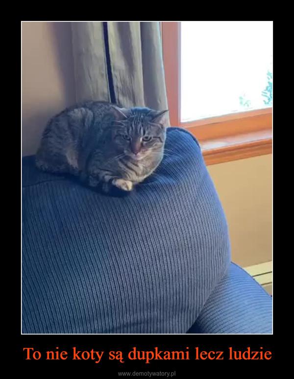 To nie koty są dupkami lecz ludzie –
