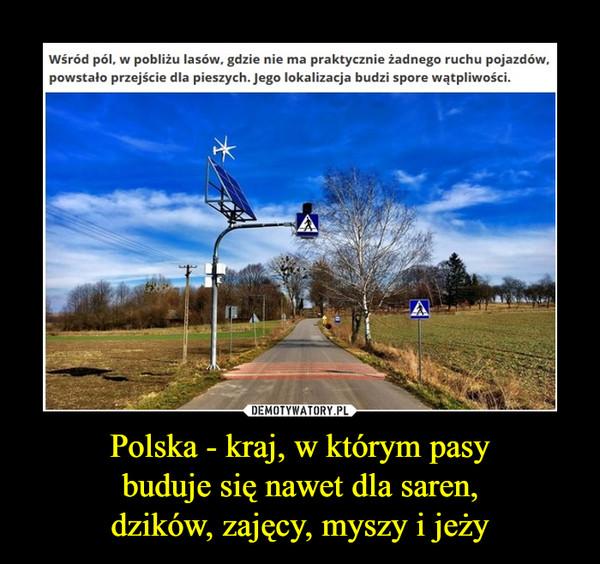 Polska - kraj, w którym pasybuduje się nawet dla saren,dzików, zajęcy, myszy i jeży –  Wśród pól, w pobliżu lasów, gdzie nie ma praktycznie żadnego ruchu pojazdów,powstało przejście dla pieszych. Jego lokalizacja budzi spore wątpliwości.