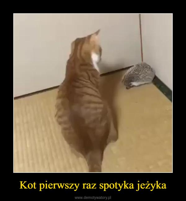 Kot pierwszy raz spotyka jeżyka –