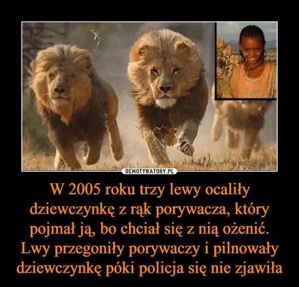 W 2005 roku trzy lewy ocaliły dziewczynkę z rąk porywacza, który pojmał ją, bo chciał się z nią ożenić. Lwy przegoniły porywaczy i pilnowały dziewczynkę póki policja się nie zjawiła –