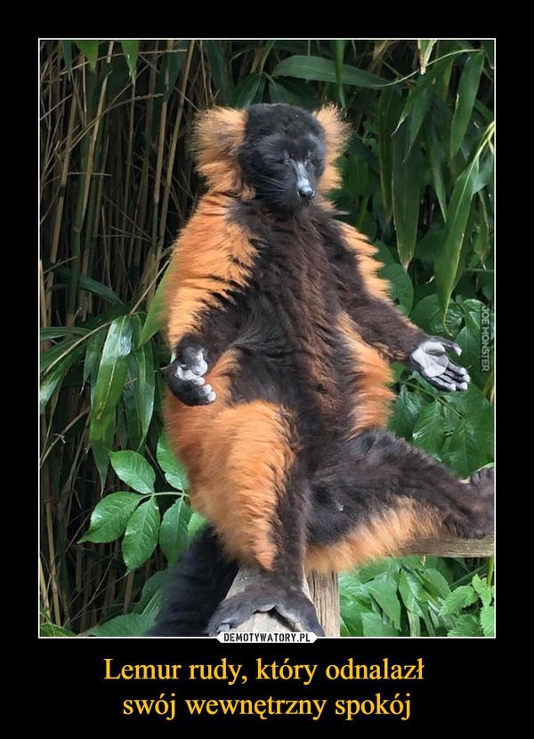 Lemur rudy, który odnalazł swój wewnętrzny spokój –