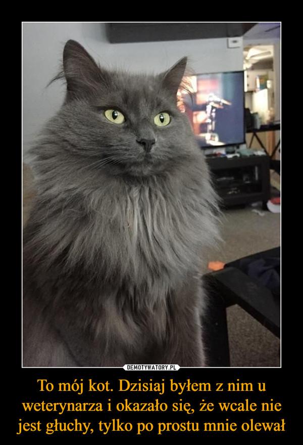 To mój kot. Dzisiaj byłem z nim u weterynarza i okazało się, że wcale nie jest głuchy, tylko po prostu mnie olewał –