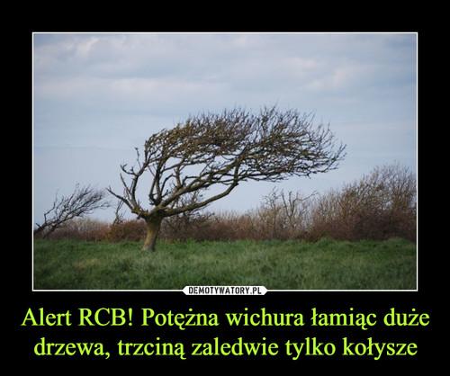 Alert RCB! Potężna wichura łamiąc duże drzewa, trzciną zaledwie tylko kołysze