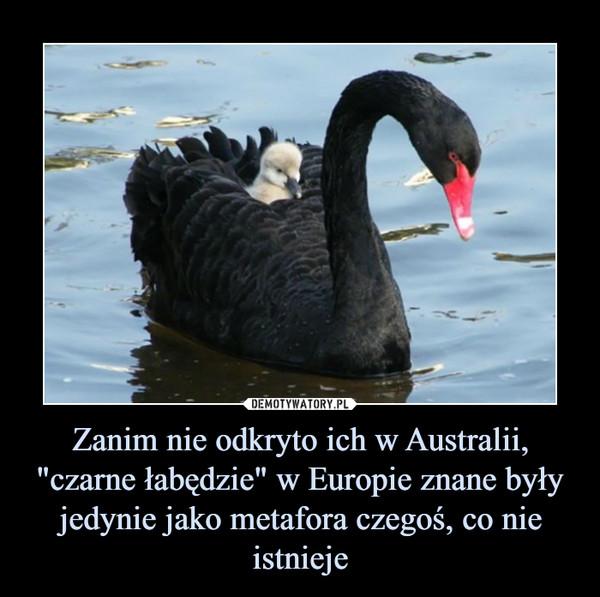 """Zanim nie odkryto ich w Australii, """"czarne łabędzie"""" w Europie znane były jedynie jako metafora czegoś, co nie istnieje –"""