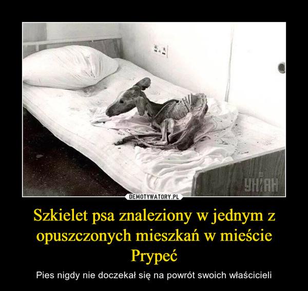 Szkielet psa znaleziony w jednym z opuszczonych mieszkań w mieście Prypeć – Pies nigdy nie doczekał się na powrót swoich właścicieli
