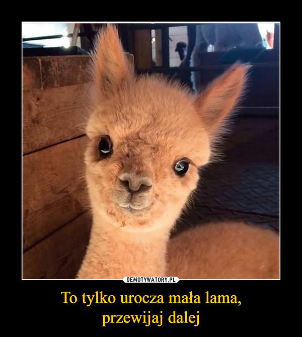 To tylko urocza mała lama,przewijaj dalej –